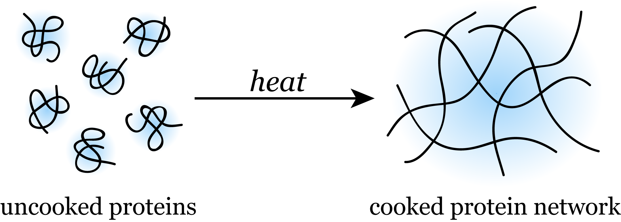 Denaturation of the protein