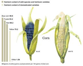 Wild Phytonutrients & ResveratrolResearch