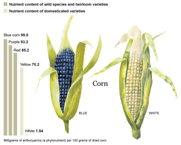 DomesticatedvsWildCorn