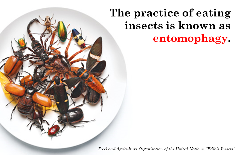 6 Things About Eating Insects  scienceandfooducla