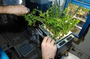 Space Veggies & BlandTomatoes
