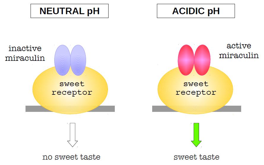 Acidic Taste In Mouth