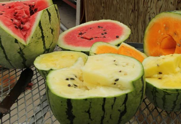 These watermelons don't just look different, they taste different, too! (David MacTavish/Hutchinson Farm)