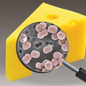 Cheese Microbes & PizzaMath