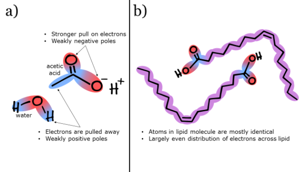 Figure 1. a) Acetic acid and water are polar molecules. b) Lipids are nonpolar molecules.