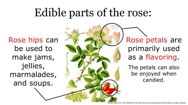 Fotm, rose slide 2