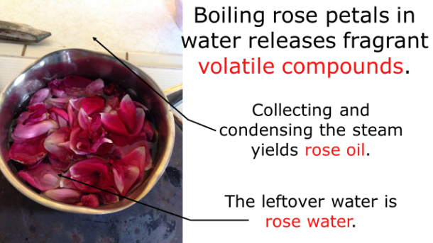 Fotm, rose slide 4