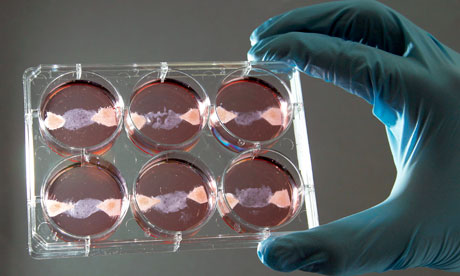 In vitro meat samples. Photo Credit (Janique Goff/Flickr).