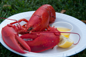 Lobsters: A Crustacean Sensation