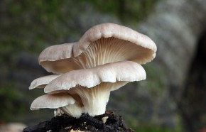 Mushrooms on Mortality, Menus, and the Mind