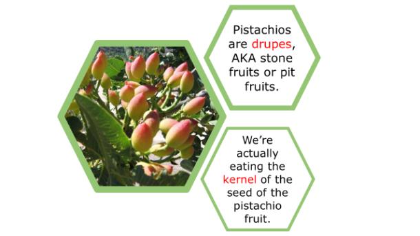 Fotm, pistachio slide 2