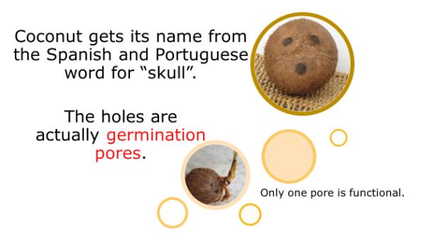 Fotm, coconut slide 1
