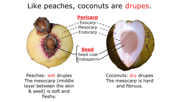 Fotm, coconut slide 2