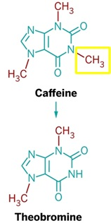 Figure 1: During the metabolism of caffeine in the body, the methyl group (highlighted by the yellow box) is removed from caffeine and it is converted to theobromine (Modified from Wolf LK, 2013) [9].