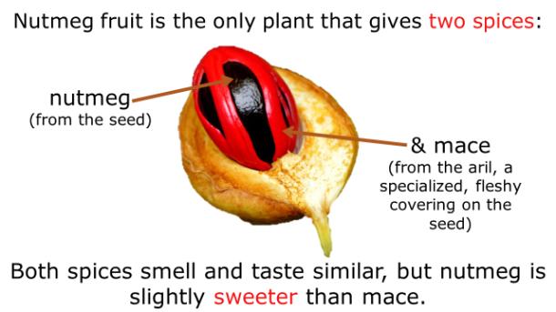 Fotm, nutmeg slide 4