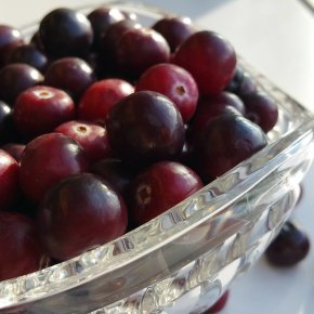 Futuristic Cranberries & 1959Cranberries