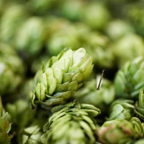 Better Hops & PerfectWine