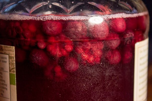Kombucha flavored with raspberries. Photo credit: Lukas Chin (Wikimedia Commons)