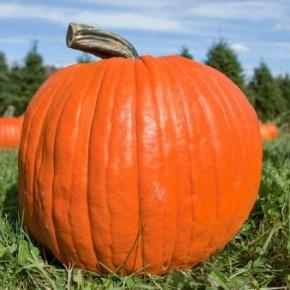 Pumpkin Domestication & FruitBenefits
