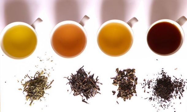 Left to right: green tea, yellow tea, oolong tea, and black tea. Photo credit: Haneburger (Wikimedia Commons)