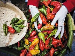 Bhut Jolokia &Sriracha