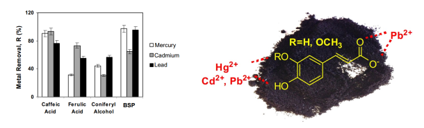 Lignans in black sesame seeds are responsible for heavy metal binding. Left: Model pigments representing digested lignans were compared to ground black sesame seeds (BSP) for heavy metal removal. Right: Caffeic acid and the suggested binding sites for cadmum (Cd2+), lead (Pb2+), and mercury (Hg2+)