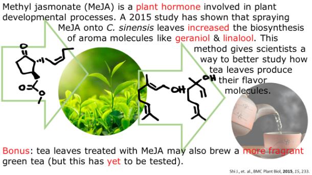 Fotm, Green tea slide 7