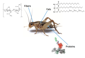 Edible Insect Ingredients: SustainableProtein