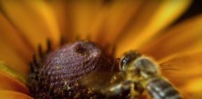 Bumblebeer & BarleyGenome