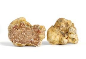 Fungus Fraud & PiperineHistory